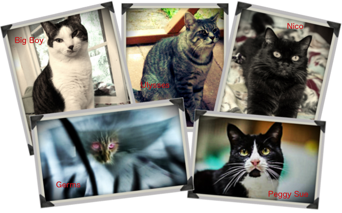 The Stars of Zombie Cats from Mars!