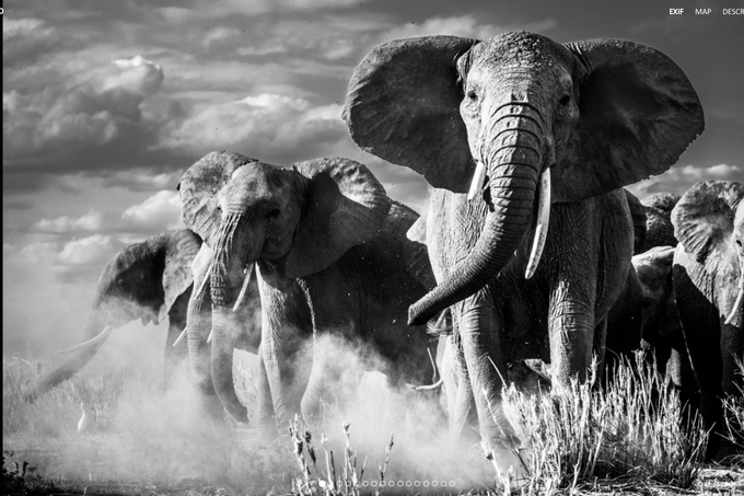 A stunning photograph of elephants in the wild by acclaimed wildlife photographer Pieter Ras, printed on canvas