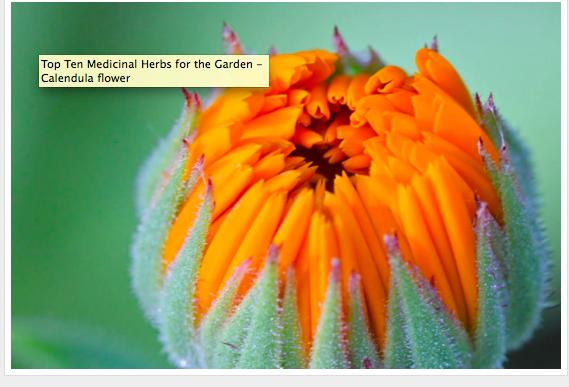 A page from Juliet Blankenspoor's beautiful Blog: Blog Castanea