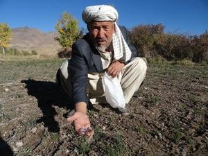 One of our farmers, Haji Yosef, on his farm in Wardak Province