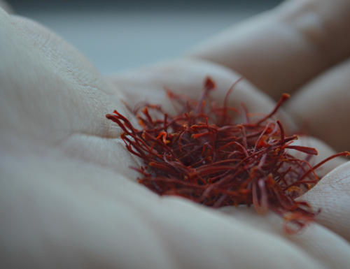 A handful of our premium Afghan saffron