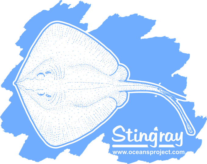 My stingray design, one of a few designs available as a T-shirt, hoody, or iPhone cover.
