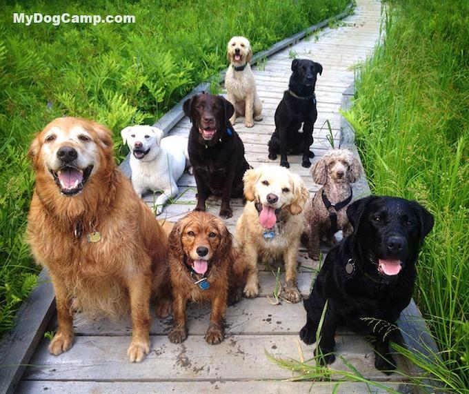Cars For Sale In Burlington Vt Autotrader Mail: My Dog Camp By Rhonda Bilodeau