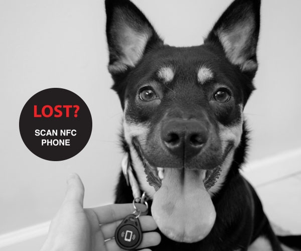 Discretely program your Phone number on a NFC Keychain for your Pet's collar. Immediate calls or texts from the person who finds your missing companion!