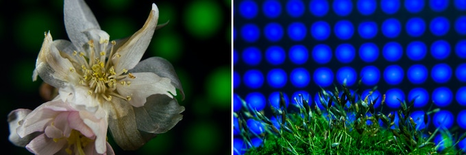 Example images using the Adaptalux Backdrop Setter