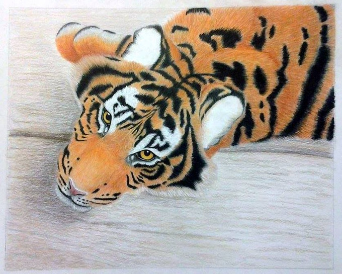 """Watching You"" (Tiger A) Portfolio Piece, Colored Pencil, 2015 A. Wier"