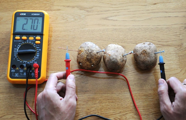 Potatoes acting as power-producing batteries.