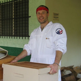 Working bees in Panama