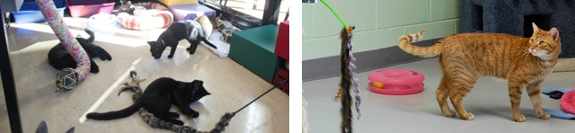 Kittens play with one of our first iPet Companion sets at Oregon Humane society, ca. 2010 (left); A cat at Idaho Humane Society checks out an iPet toy operated remotely via the internet, at our first shelter location (right).