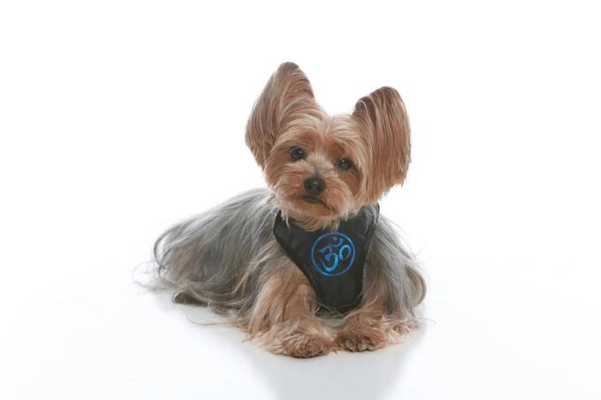 Zen Dog - OM Collection