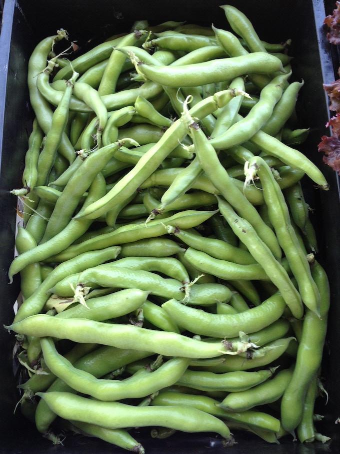 A School Favorite! Fava Beans