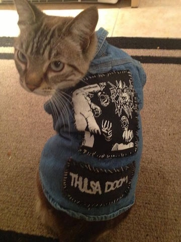 Cats are cool.
