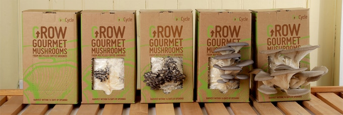 GroCycle Grow Your Own Kits