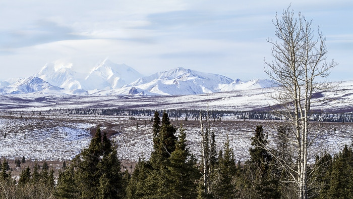 North Bound: Photographing Denali Nat'l Park in -40F by