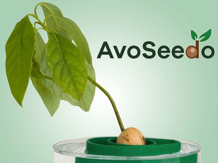 AvoSeedo has been developed to facilitate the germination process. It has never been easier to grow your own avocado trees!