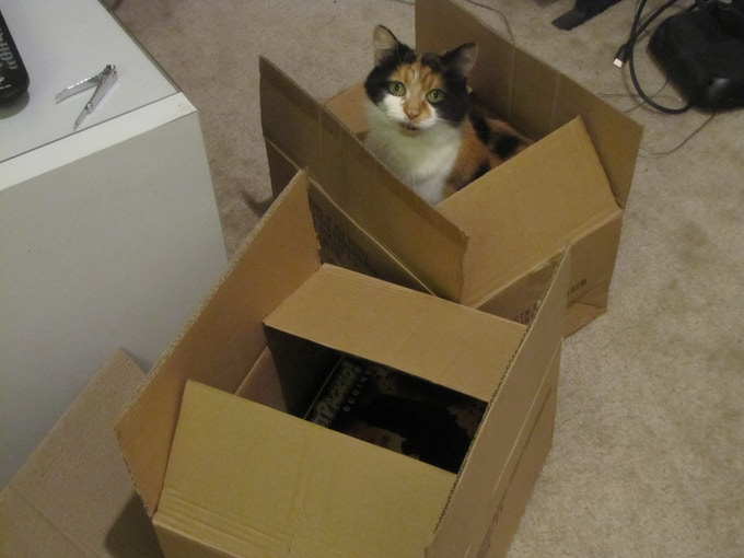Miss Sakaki sitting inside a box of book 3s
