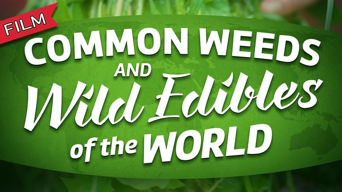 An instructional video on how to safely and sustainably enjoy the most common weeds and wild edibles of the world.