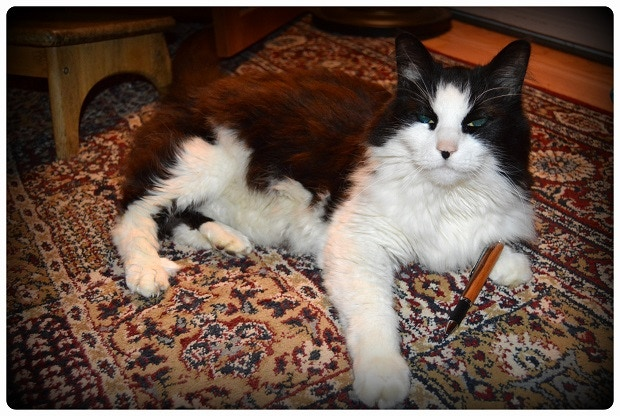 Bubbas, my helper cat. Apprentice wood turner and pen aficionado.