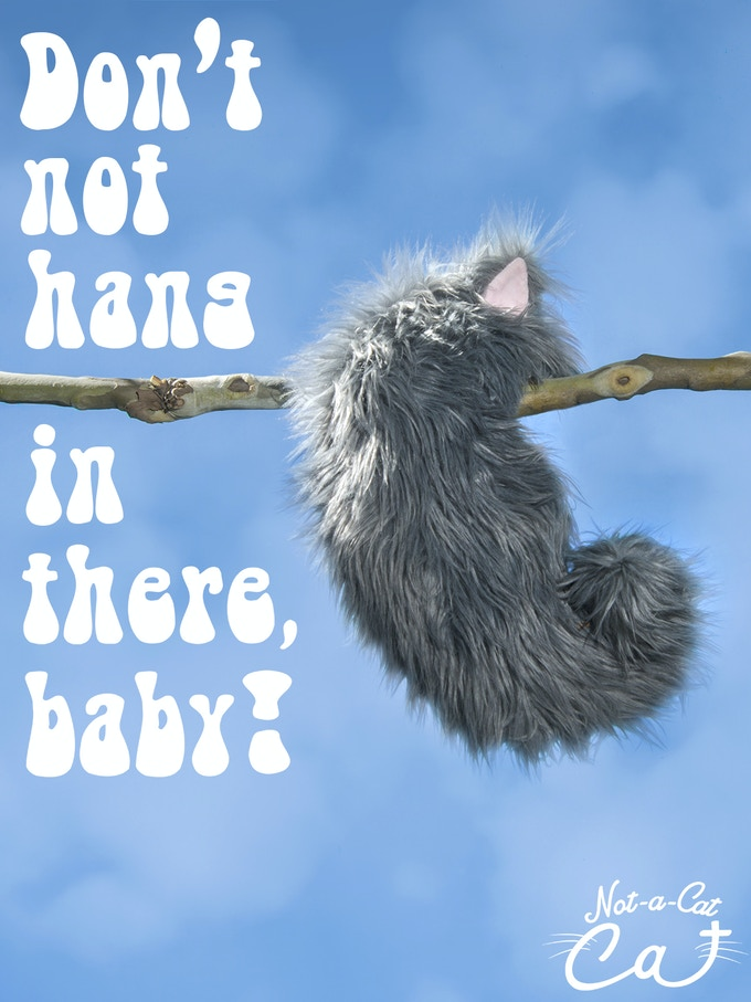 The Not-a-Cat Cat Inspirational Poster