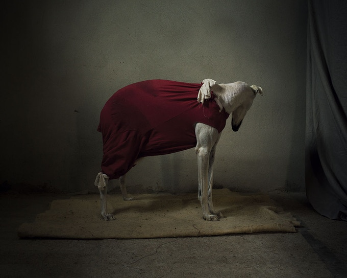 The dogs in this book are photographed in rescue centres using natural light