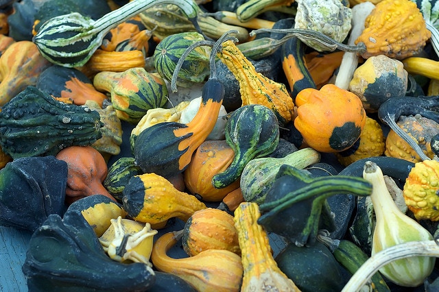 """For $40: A decorative gourd signed by the author of the Internet Tendency multi-platinum hit """"It's Decorative Gourd Season, Motherfuckers."""" (Photo by Flickr user David Goehring, used under Creative Commons license.)"""