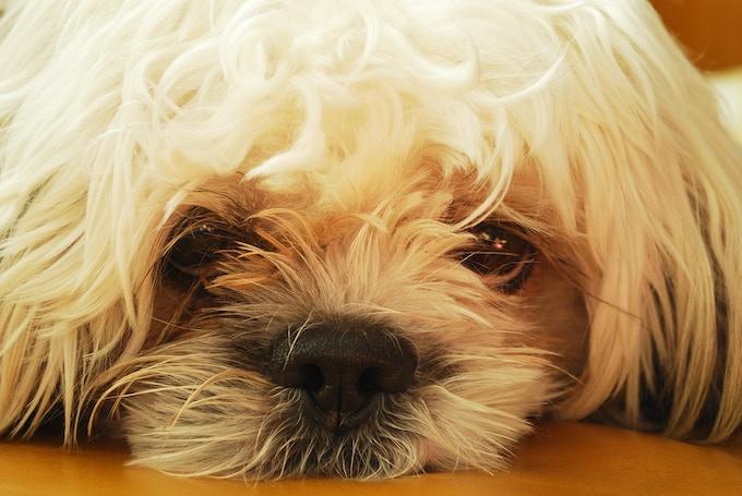 our mascot, Sasha