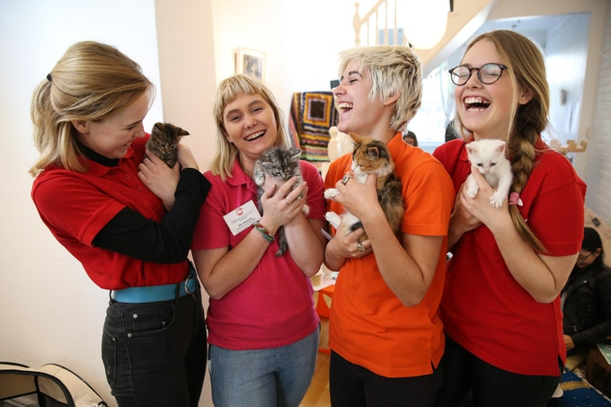 Maggie's Rescue Volunteers at our pop up kitten cafe event, photo credit: Attila Szilvasi Photography