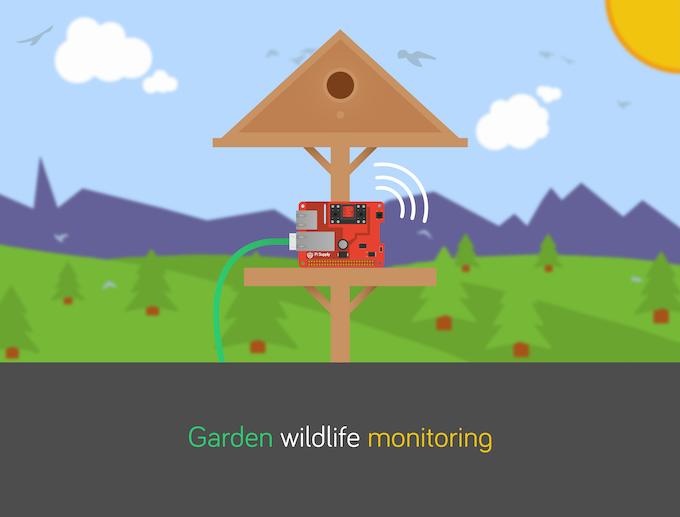 Pi PoE Wildlife Monitoring Project