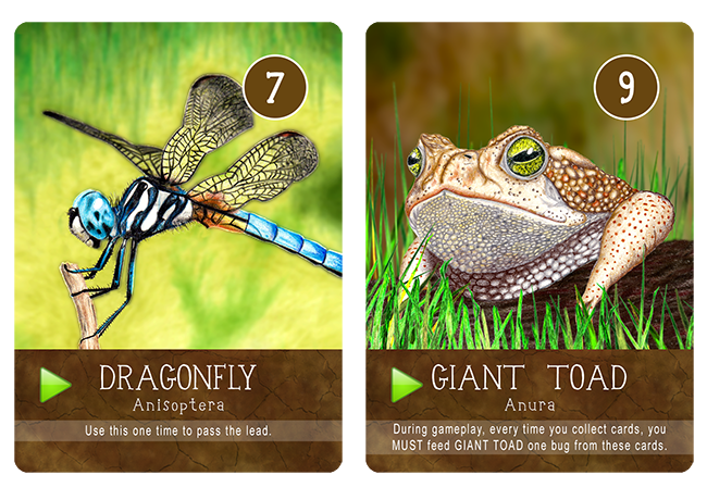 DRAGONFLY & GIANT TOAD