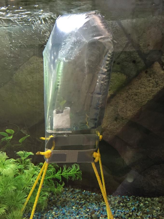 Prototype 01 in one of the company's regular freshwater aquarium