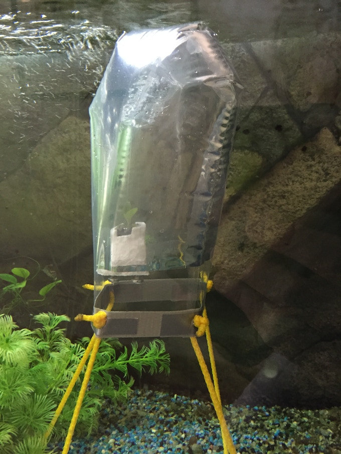 Prototype 01 in one of the company's regular freshwater aquarium