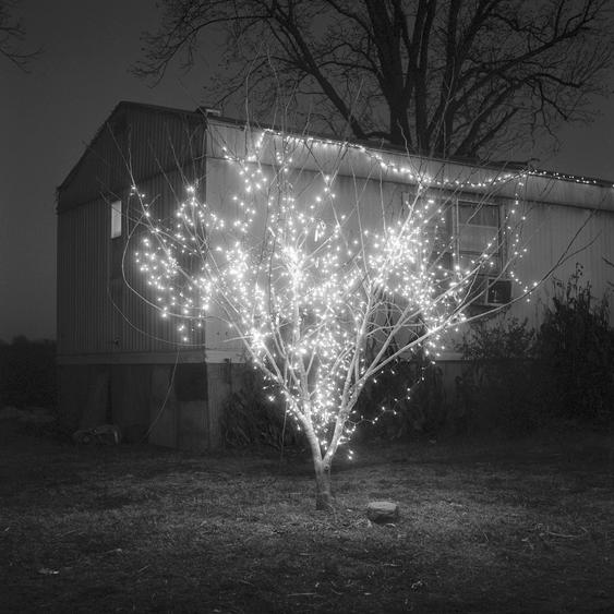 $420-Christmas Tree, Alligator. Mississippi. Brandon Thibodeaux. 2012 - 6x6 Gelatin Silver Selenium Toned Print ed. 20
