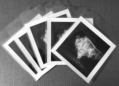 $420- Print detail (single print)-Christmas Tree, Alligator. Mississippi. Brandon Thibodeaux. 2012 - 6x6 Gelatin Silver Selenium Toned Print ed. 20