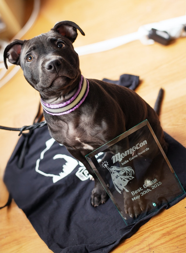 Our MomoCon prize and our beloved office dog Vaffel.