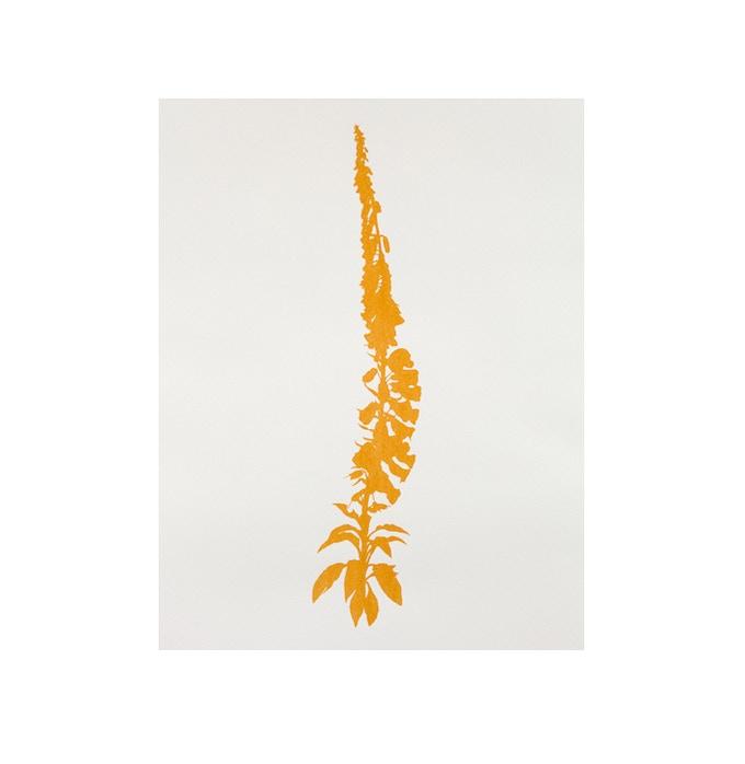 £800: Edward Chell, Foxglove Digitalis Purpurea: Road Dust M5 2013, Road dust on 400gsm acid free watercolour/drawing paper, 135cm x 105cm