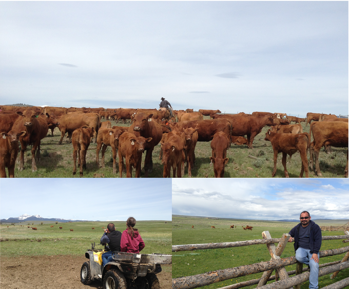 At the Dell Bacon Ranch in Montana, Amber and I selecting calves