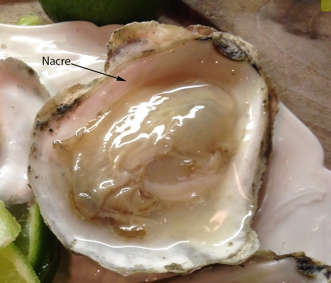 Figure 04 The Nacre on the inside of an oyster shell