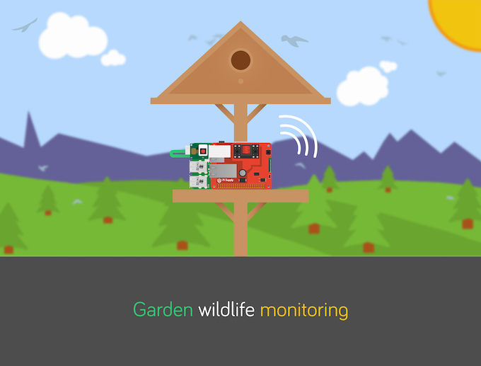 Pi PoE Wildlife Monitoring Project