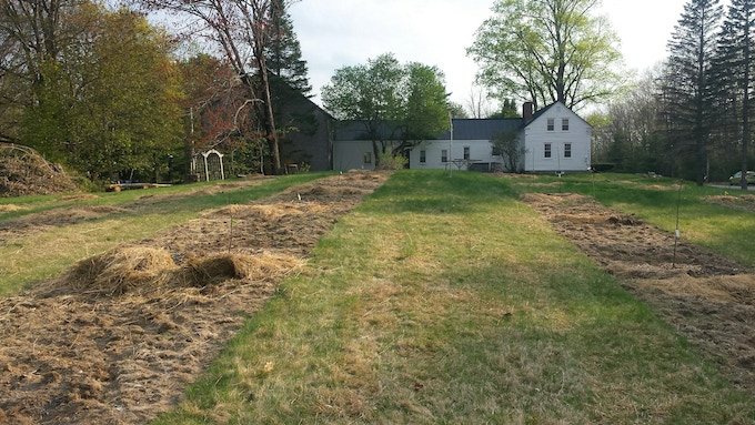 The newly planted orchard and 230-year old farmhouse.