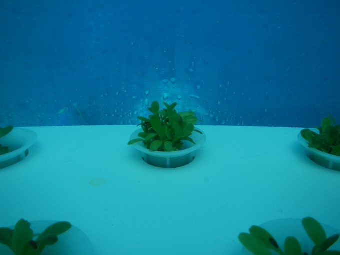 The amount of water that condenses, especially at night, in the biospheres, is exceptional. Sometimes it may also become a problem - such an abundance of naturally created fresh water might find useful purposes in harsh environments.