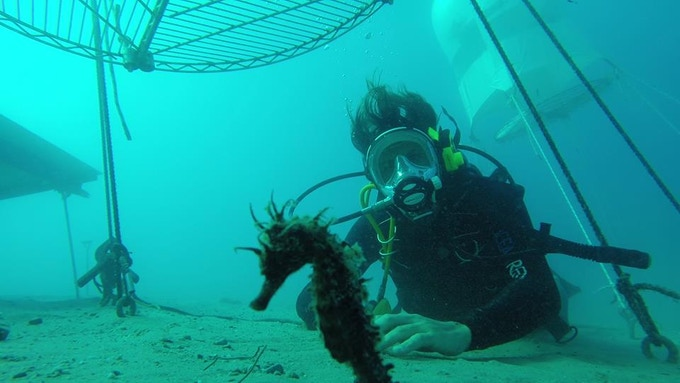 Seahorses, pretty rare in the mediterranean and consider a species at risk, seem to love Nemo's Garden site.. they come back every year !