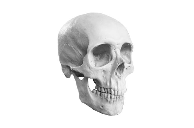 7inch - 18cm life size Caucasian male boneclone