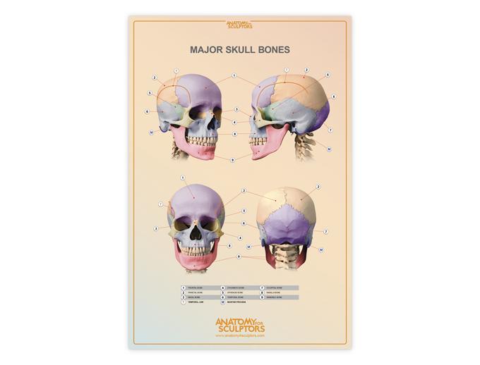Poster - Major Skull bones - with AR