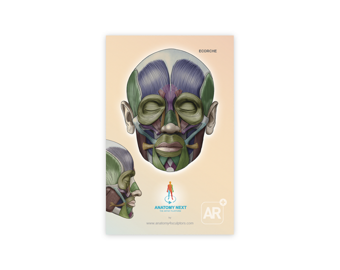 Pocket size Head & Neck Ecorche chart with an interactive 3D image