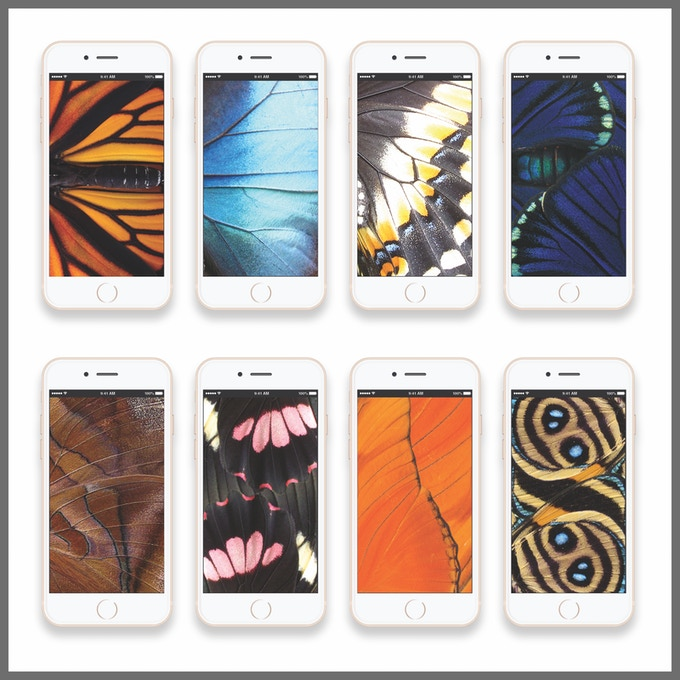 8 Pura Mariposa wallpapers for your iphone or android