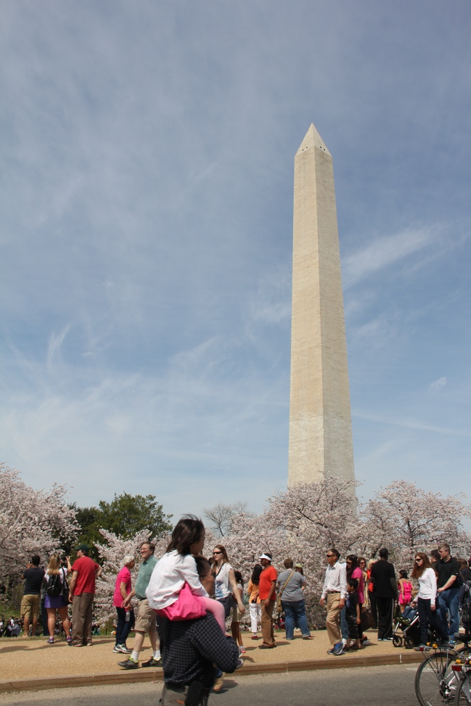 Cherry Blossom festival in Washington, DC. By Shamira