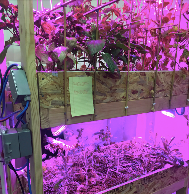 Aquaponics set-up with colored LEDs and fish & crayfish living happily