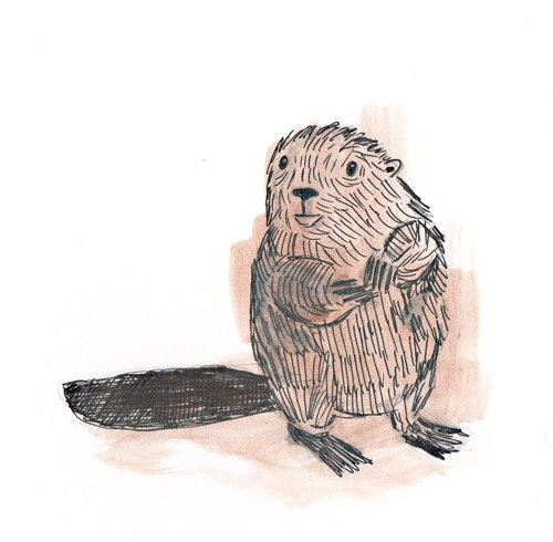 Meet Little Beaver!