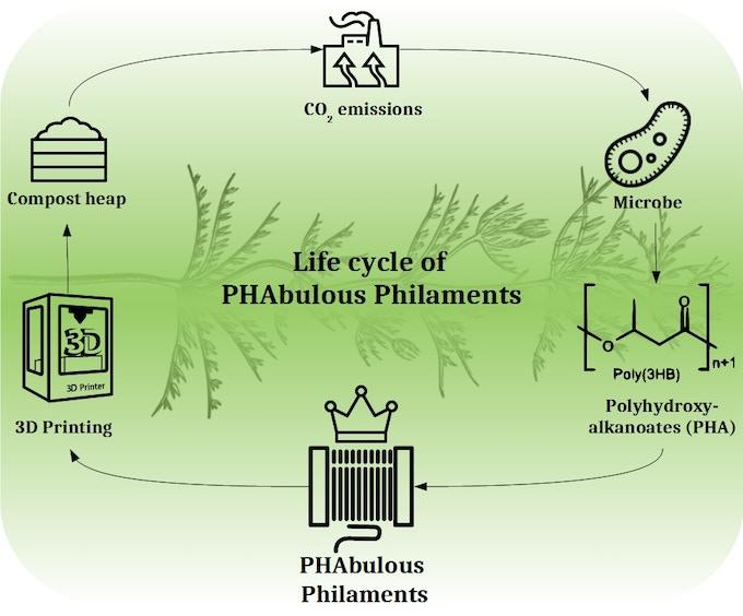 Life cycle of PHAbulous Philaments