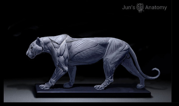 Leopard Anatomy Model, this is a WIP final pose maybe different than what's being presented here.
